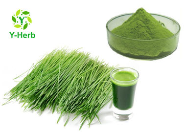 Wheatgrass Extract rau bột xanh Wheat Grass Juice Concentrate Powder